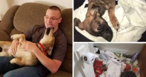 Man Comes Home From Army To Find His Dogs Starving To Death