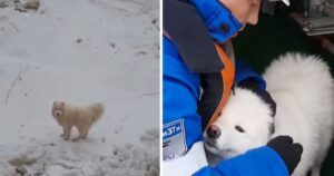 Fluffy Dog Rescued After Wandering Arctic Ice For A Week