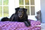 National Dog Day Gift Guide