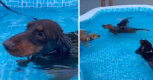 """These Swimming Dachshunds Are Making The Most Of """"Hot Dog Summer"""""""