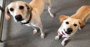 Adoptable Dog's Own Daughter Serves As His Guide Dog