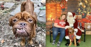Mastiff With Terminal Cancer Is Adopted During Her Final Days