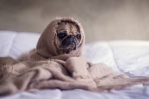 7 Ways Your Pup Is Secretly Telling You He's Stressed