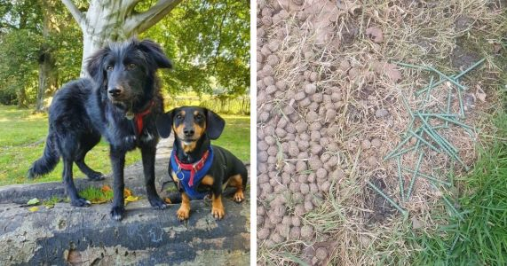 Pile Of Kibble Laced With Metal Discovered In Popular Dog Walking Spot