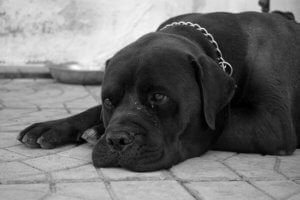 PACT Act Will Make Animal Cruelty A Federal Crime