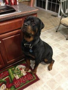 We Feel Empathy For Rottweilers Than Humans