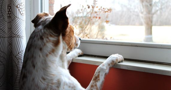It's Time To Prepare Pets For Your Return To Work. Here's How