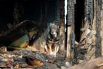 Live Near Wildfires? Vet Advice on Keeping Your Dog Safe