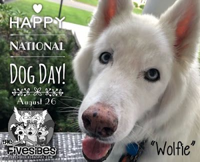 Celebrating National Dog Day, Where Something New is Happening! Hint: Rescues & Shelters Need Apply!