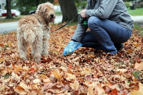 How to Stop Diarrhea in Dogs This Holiday Season