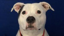 Shelter Seeks Home For Sweet Dog Who's Been There For Nearly 4 Years