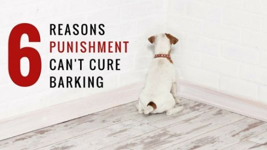 Stop Bark Collars: Why Negative Reinforcement Won't Stop Your Dog's Barking