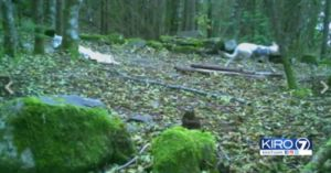 After 28 Days Lost In The Woods, A Dog Was Spotted On A Trailhead Camera